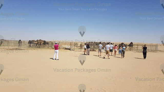 A camel farm in the empty quarter Salalah, very enjoyable moment in the empty quarter tour.
