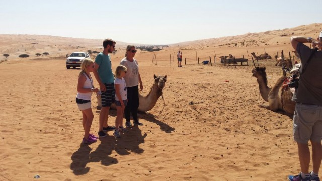 2 camels in Wahiba sands, getting ready for a camel ride