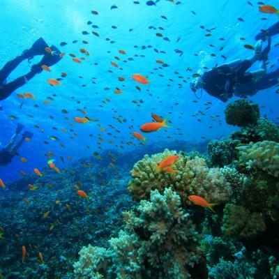 Dolphin Watcing and Snorkeling Sea Safari