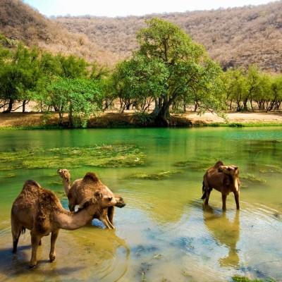 Wadi Darbat Full Day