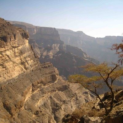 Trekking Safari